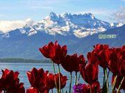 徜徉在湖光城色之间:瑞士日内瓦湖