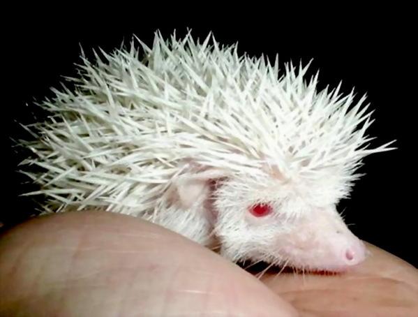 全球独特而稀少的白化动物(组图)