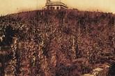 1892年,张裕从国外引进124种酿酒葡萄品种,几经周折,在烟台试种成功,这些葡萄的成功引进,告别了中国缺乏优质酿酒葡萄的历史,堪称中国酿酒葡萄的一次历史性飞跃。