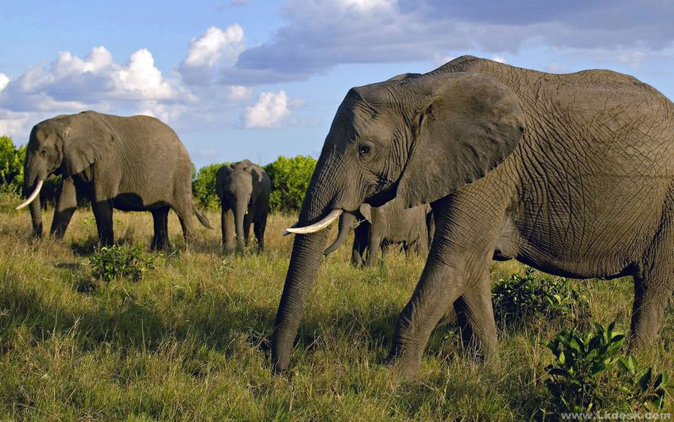 动物体型变大时,体积和身体表面积却不是按相同