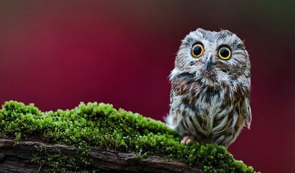 摄影爱好者眼中的动物萌图
