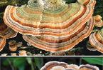 不可思议!世界上最奇特的蘑菇