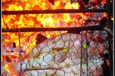 由于食材异常新鲜,炭烧是对海鲜的最高待遇。