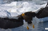堪察加半岛上生存着的多种多样的动物:棕熊、驼鹿、麋鹿、驯鹿、西伯利亚大角羊、雪羊、水貂、北极狐、蓝狐、银狐、麝鼠、加拿大海狸、堪察加星鸦、山鹰、大马哈鱼等。各种各样的鸟类则应有尽有,数不胜数。