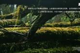 """高黎贡山北连青藏高原,这里很多古老物种被保存下来,于是高黎贡山也就成为了中国云南这个世界的""""动物王国""""、""""植物王国""""中最巨大,也最宝贵的一片领土。她拥有 """"雉鹊类的乐园""""、""""哺乳类动物祖先的发源地""""、""""东亚植物区系的摇篮""""等令人肃然起敬的称号。(图片来源:中国雅虎)"""