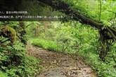 旅行提示:2.进入黑竹沟景区的道路已经有所改善,自驾请谨慎驾驶。