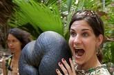 海椰子被奉为塞舌尔之宝,一颗海椰子通常在10公斤左右,最重的可达30多公斤。