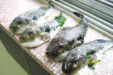 深海鱼  压力大也让男性罹患高脂血症、中风的年龄层降低。深海鱼中的Omega-3脂肪酸可以阻止血液凝结、减少血管收缩、降低三酸甘油脂等,对心脏血管特别有益。