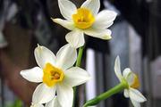 春季踏青需防花毒:有毒花粉一览