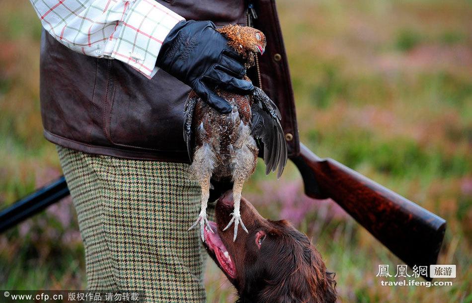松鸡狩猎季节已到来 你的猎枪准备好了吗