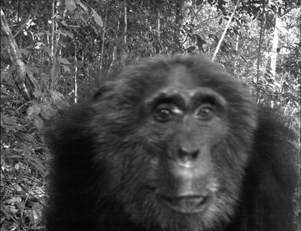 相机陷阱捕捉动物生存细节:林负鼠仅重26克