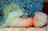 海底新生物