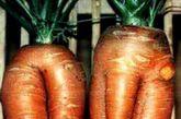 畸形的胡萝卜
