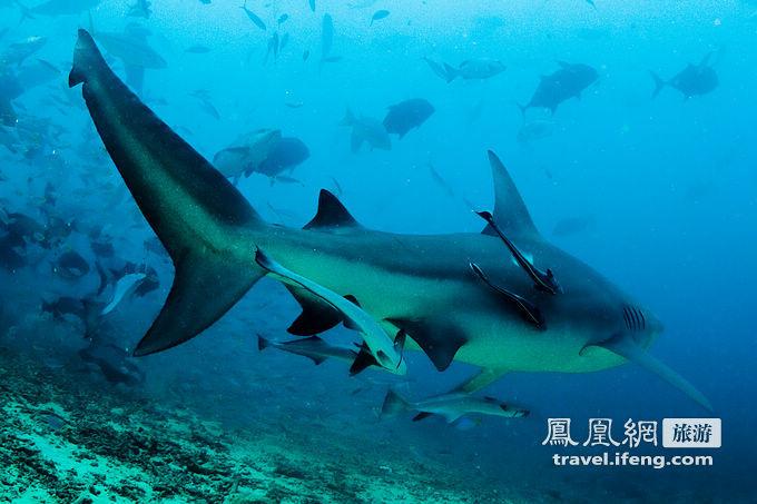 无保护深海潜水喂鲨鱼 最惊险的潜水