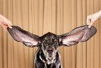 2012吉尼斯世界纪录出炉 女子舌长9.75厘米