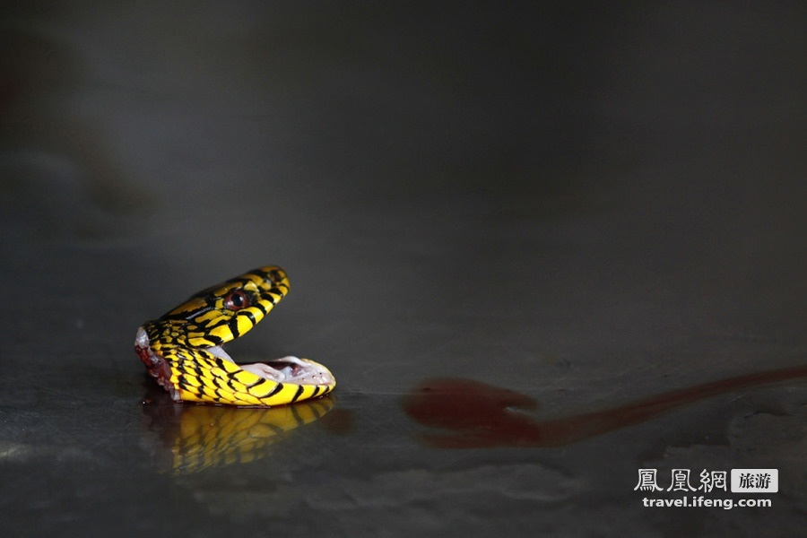 血腥杀蛇 探秘中国第一蛇村