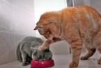 爆笑趣图:动物知心话(组图)