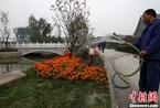 """北京玉河古河道重现700年前""""水穿街巷"""""""