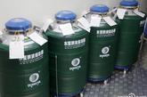 存放精子标本的液氮容器,可放置七八百份精子标本。