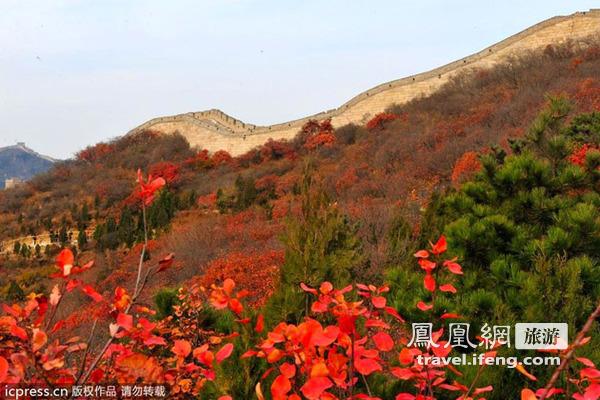 八达岭长城红叶岭风景区枫叶似火