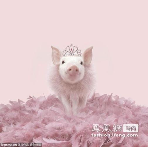 粉红猪萌死人 摆pose很有明星范儿