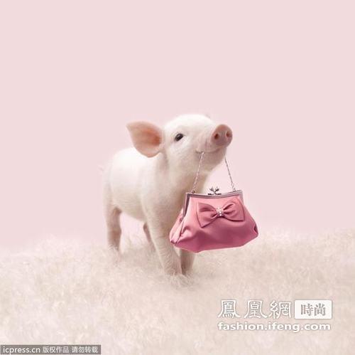 猪萌图片大全可爱