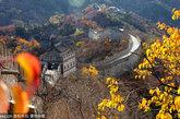 2011年11月2日,北京,大雾散去后美丽的慕田峪长城深秋景色。当日,持续多天的北京大雾散去,北京怀柔慕田峪长城尽显深秋的美丽,众多中外游人走在古长城上在观赏深秋季节长城的迷人景色同时不断举起拍照留念。