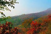 """坡峰岭:位于北京市西南房山区周口店镇黄山店村境内西北3公里处,毗邻北京宝金山玉虚宫。""""坡峰岭""""的景色独特,石道蜿蜒,红叶随行,仰角层林尽染,举头云峰雾绕,与香山不同之红,一片耀眼的红色中,点缀着黄、橙、绿……,而每种颜色又呈现出多种色调,如同画家用颜料绘出一般。(摄影:在路上_飘)"""