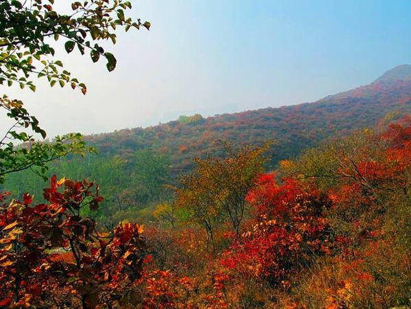 秋末赏红不去香山 房山坡峰岭赏层林尽染