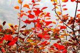 """友告诉我,位于北京市房山区周口店镇黄山店村境内西北3公里处,毗邻北京宝金山 """"坡峰岭""""红叶观赏景色独特,石道蜿蜒,红叶随行,仰角层林尽染,举头云峰雾绕,与香山不同之红,一片耀眼的红色,点缀着黄、橙、绿……,而每种颜色又呈现出多种色调,如同画家手中的调色盘,色彩斑斓。 (摄影:在路上_飘)"""