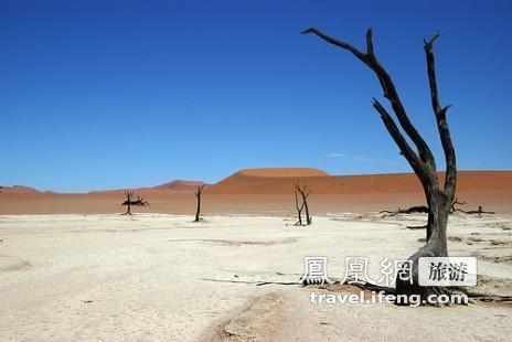 """走进纳米比亚""""死亡谷"""" 900年古树墓地奇观"""