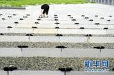 二战期间,近4万名中国劳工被强掳到日本,据官方统计,共有6830名中国劳工遇害。据了解,这次布鞋摆放活动的参与者有当年被掳劳工中的幸存者及遇难者家属,他们来自河北、山东、天津等省市。海外华侨、日本友人、台湾朋友等也参与了布鞋摆放活动。
