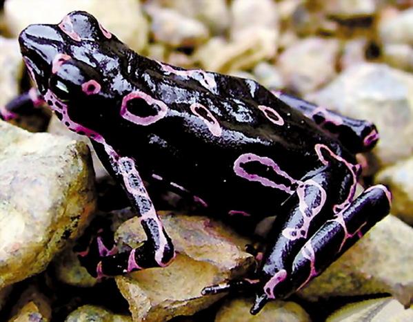 文章内容 >> 世界上毒性最大的动物是什么  世界上毒性排名前十的蛇