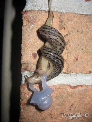 动物世界千奇百怪的交配过程