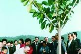 邓小平在深圳仙湖植物园种下一棵四季常青的高山榕。