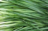 韭菜:又名起阳草、壮阳草、长生韭,是一种生长力旺盛的常见蔬菜。为肾虚阳萎、遗精梦泄的辅助食疗佳品,对男性阴茎勃起障碍,早泄等疾病有很好的疗效。
