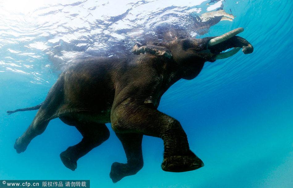 最喜欢的动物大象