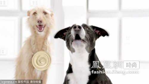 狗狗合唱团演唱星球大战主题曲
