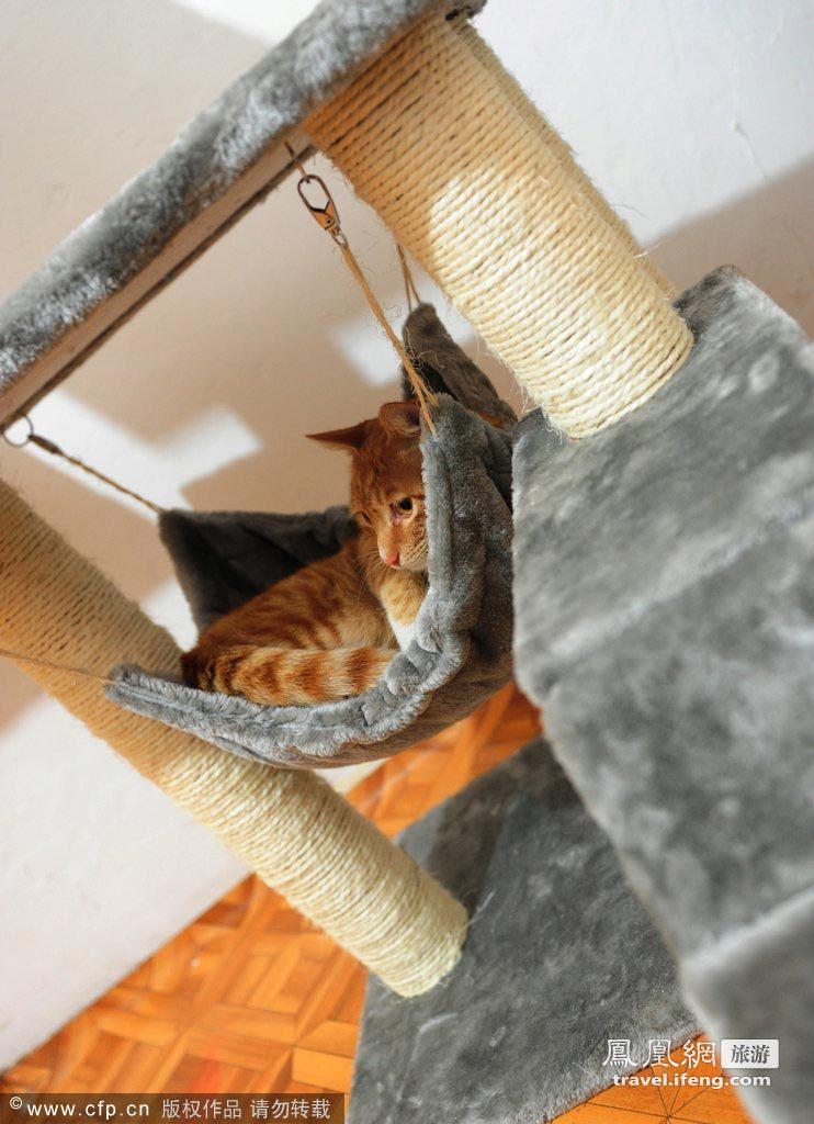 实拍合肥床上猫咪食住用均针对性v床上怎么旅馆情趣玩夫妻图片