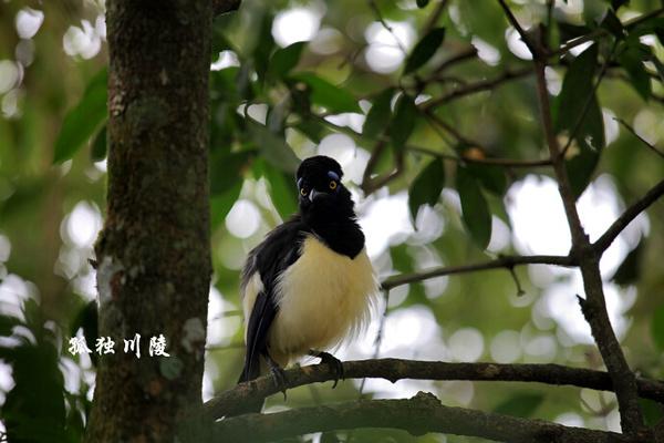 动物 南美/【4】呆鸟,有草泥马的风骨