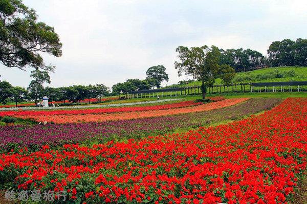 大溪花海农场虽不大,却设置了30个观光景点图片
