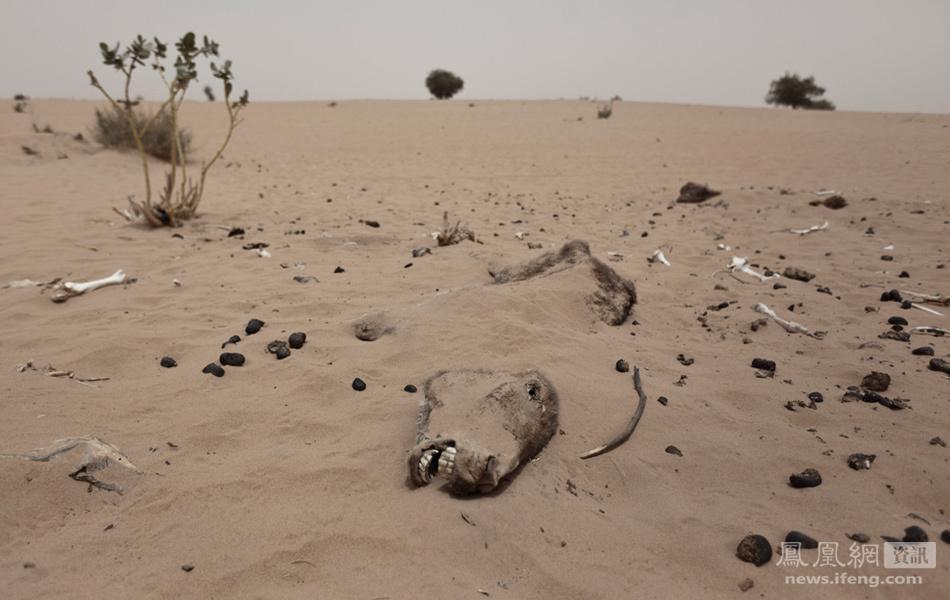 非洲萨赫勒地区的食品和营养危机