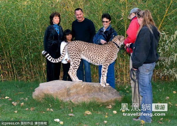 猎豹与游客合影态度友善  专业精神让人惊叹