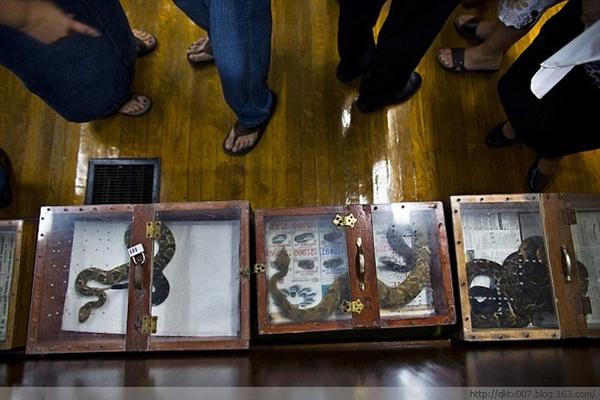 【诡异】美国宗教仪式玩蛇饮毒害死人(纪实摄影) - wamoga - wamoga