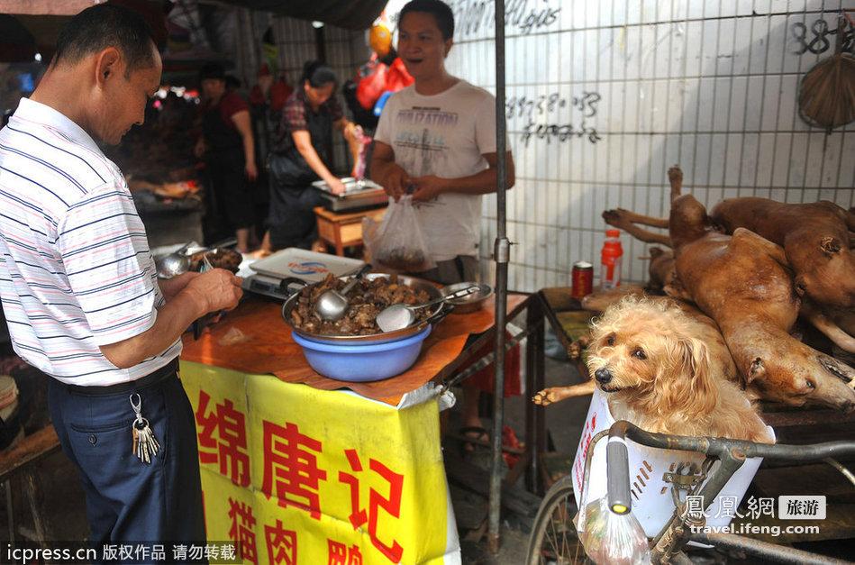 How Does Dog Meat Taste Like