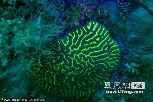 """光怪陆离海底世界 探寻红海""""荧光""""生物"""