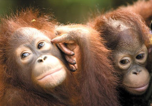 五大动物主题酒店 与大自然亲密接触-手机凤凰网