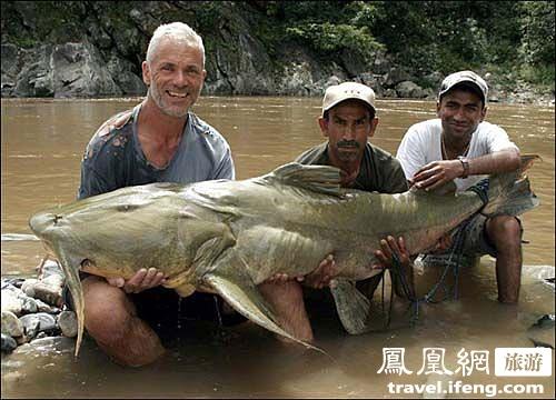 揭秘全球长相恐怖的濒危巨型鱼