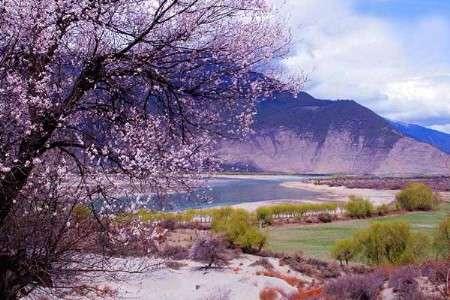 到西藏林芝赏桃花 欣赏高原珍贵的那片红