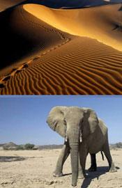 纳米比亚纳米比沙漠
